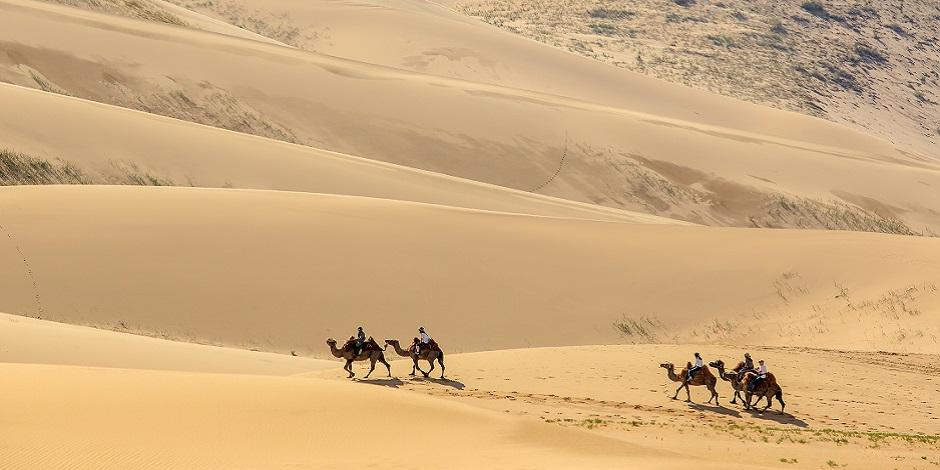 Chameaux dans les dunes de Gobi